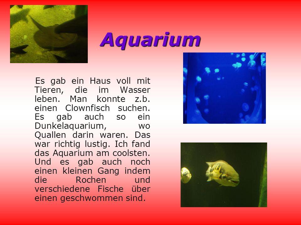 Aquarium Es gab ein Haus voll mit Tieren, die im Wasser leben.