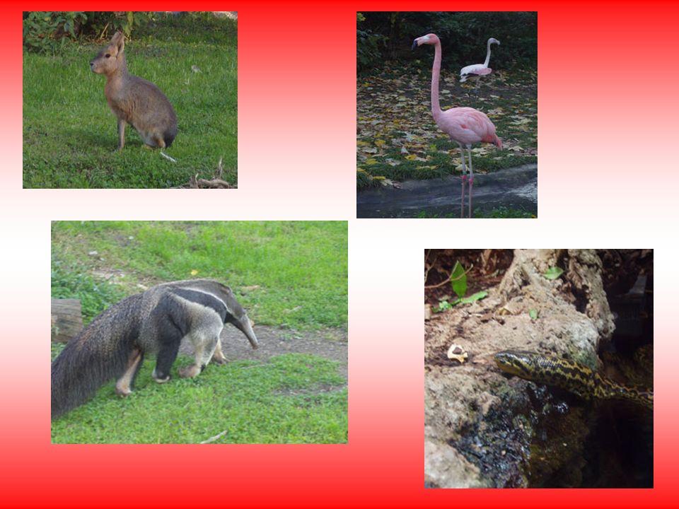 Natürlich gab es noch viele andere Tiere!!