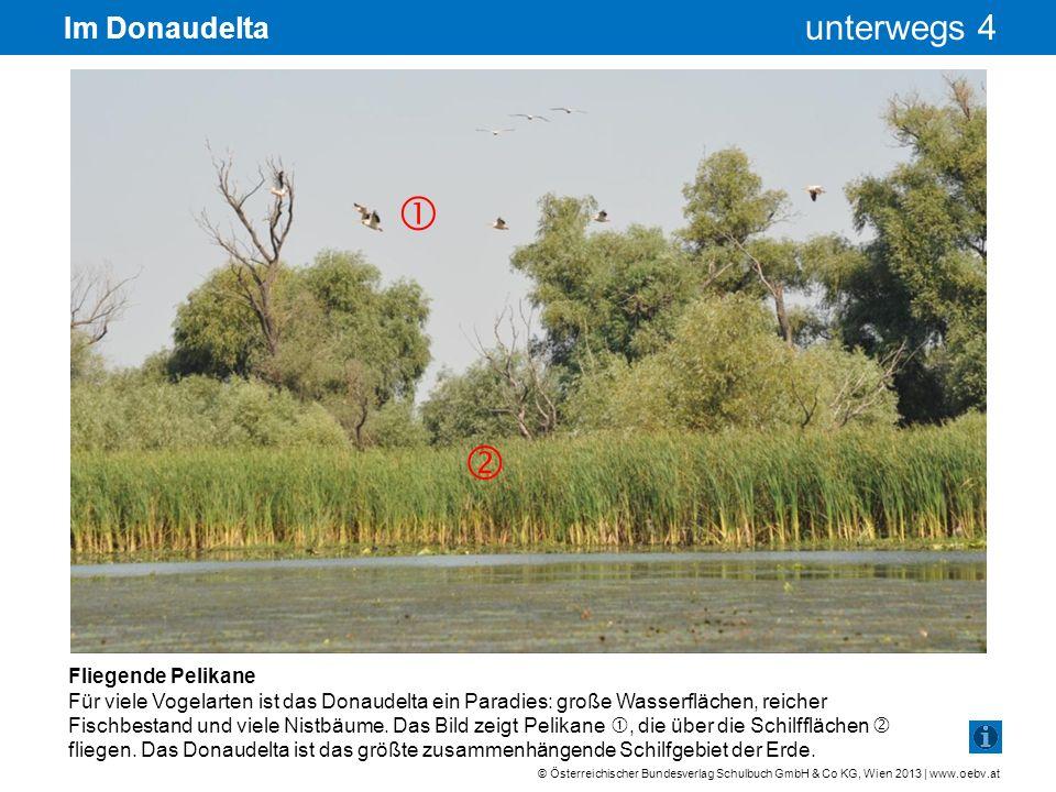 © Österreichischer Bundesverlag Schulbuch GmbH & Co KG, Wien 2013 | www.oebv.at unterwegs 4 Im Donaudelta Fliegende Pelikane Für viele Vogelarten ist