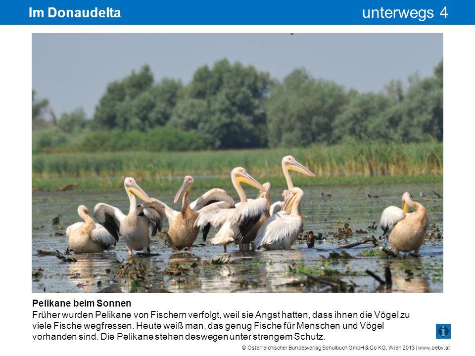 © Österreichischer Bundesverlag Schulbuch GmbH & Co KG, Wien 2013 | www.oebv.at unterwegs 4 Im Donaudelta Pelikane beim Sonnen Früher wurden Pelikane