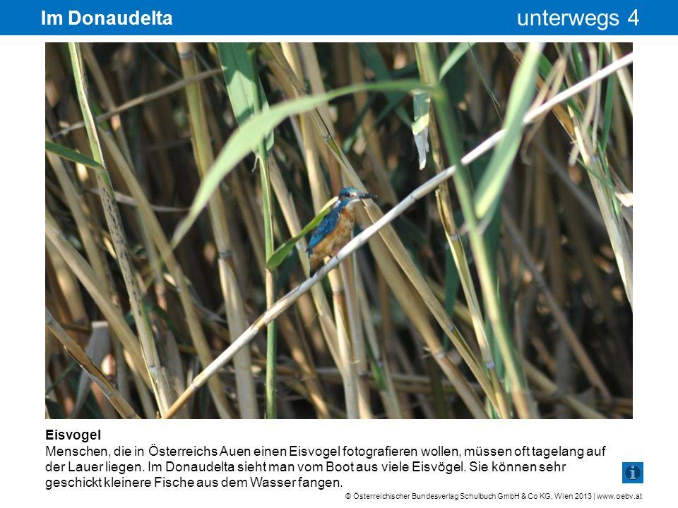 © Österreichischer Bundesverlag Schulbuch GmbH & Co KG, Wien 2013 | www.oebv.at unterwegs 4 Im Donaudelta Eisvogel Menschen, die in Österreichs Auen e