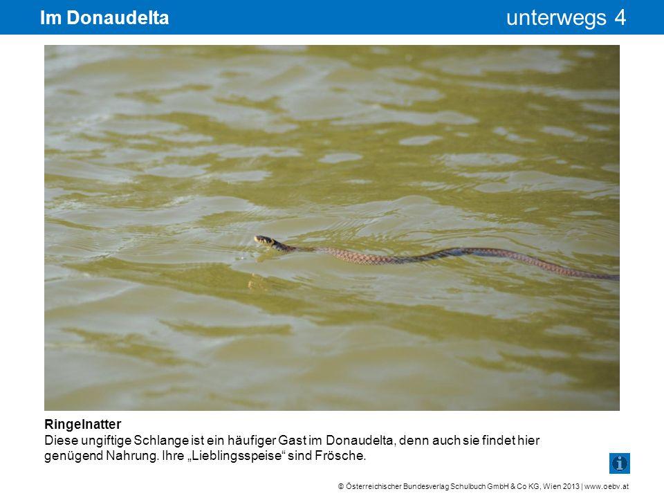 © Österreichischer Bundesverlag Schulbuch GmbH & Co KG, Wien 2013 | www.oebv.at unterwegs 4 Im Donaudelta Ringelnatter Diese ungiftige Schlange ist ei