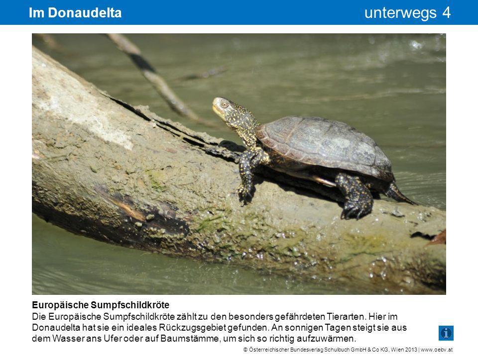 © Österreichischer Bundesverlag Schulbuch GmbH & Co KG, Wien 2013 | www.oebv.at unterwegs 4 Im Donaudelta Europäische Sumpfschildkröte Die Europäische