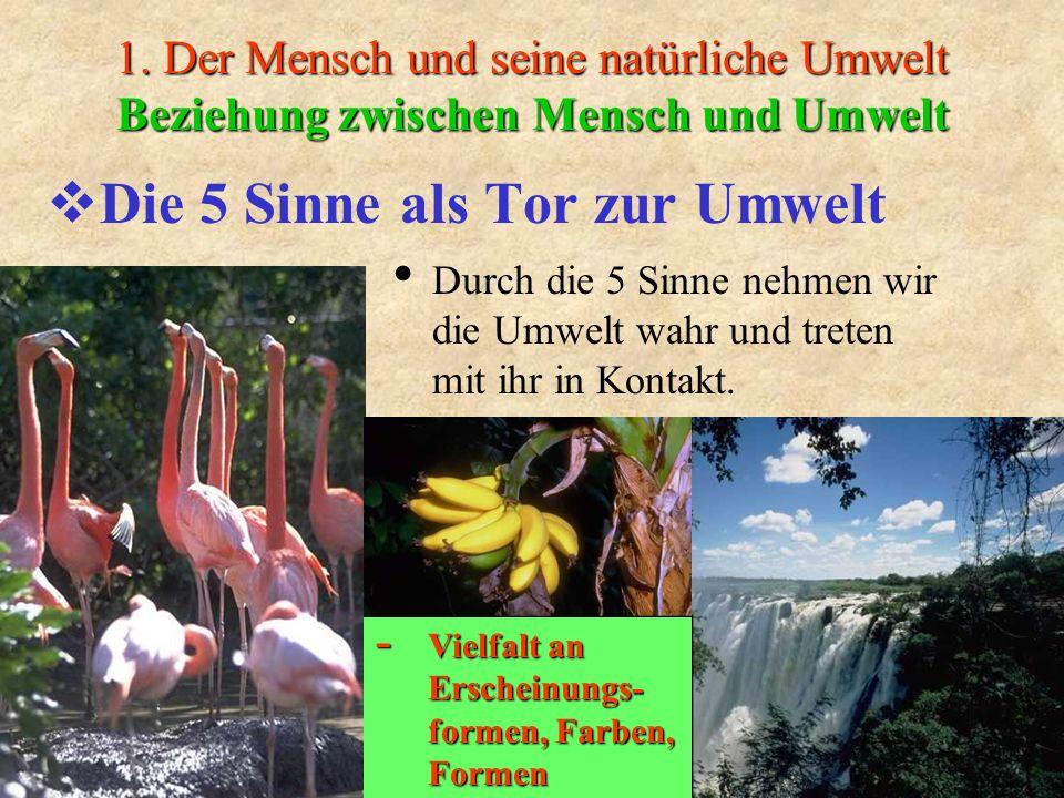1. Der Mensch und seine natürliche Umwelt Beziehung zwischen Mensch und Umwelt Die 5 Sinne als Tor zur Umwelt Durch die 5 Sinne nehmen wir die Umwelt