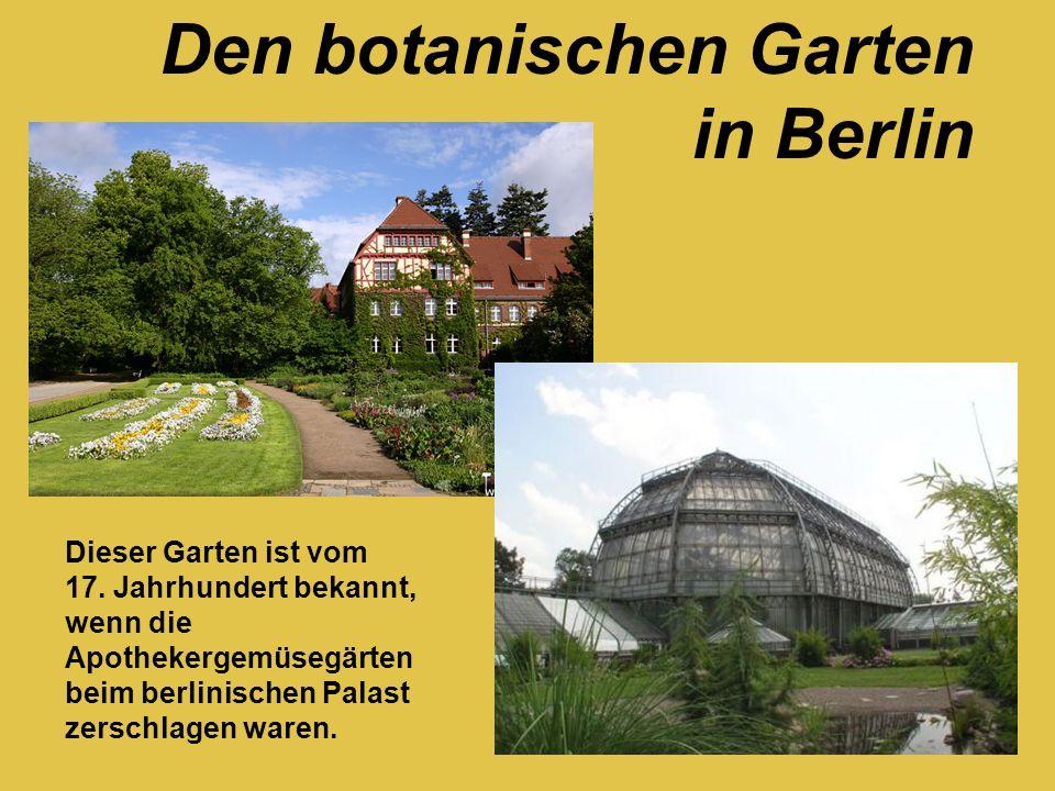 Dieser Garten ist vom 17. Jahrhundert bekannt, wenn die Apothekergemüsegärten beim berlinischen Palast zerschlagen waren. Den botanischen Garten in Be