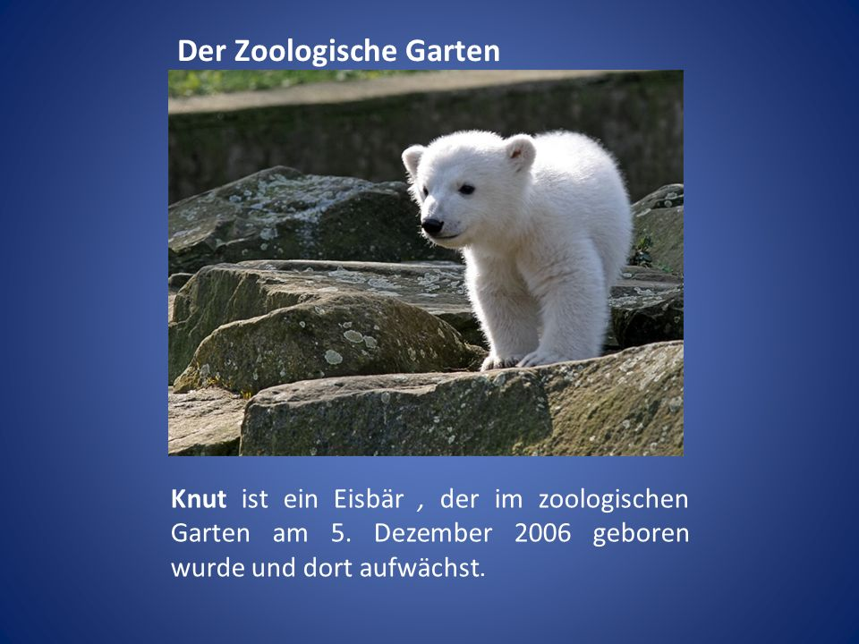 Der Zoologische Garten Knut ist ein Eisbär, der im zoologischen Garten am 5. Dezember 2006 geboren wurde und dort aufwächst.