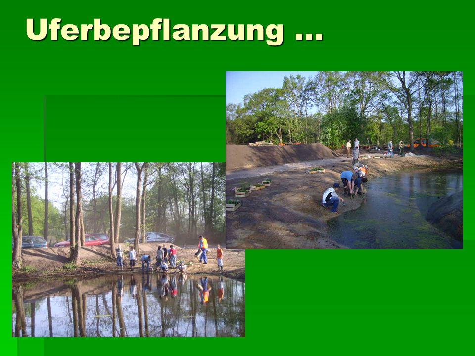 Uferbepflanzung...
