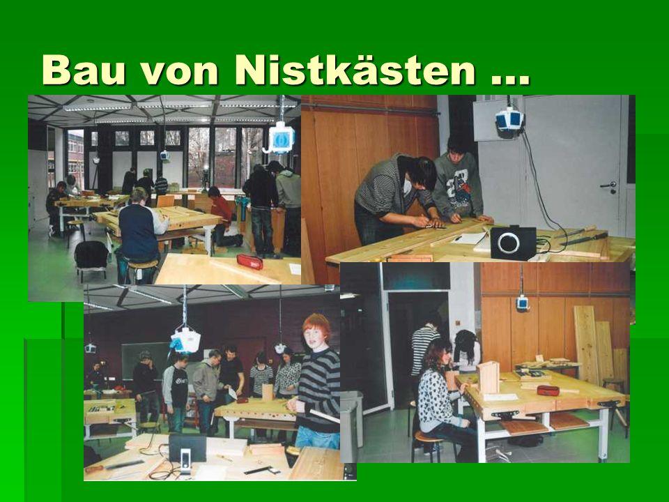 Bau von Nistkästen...