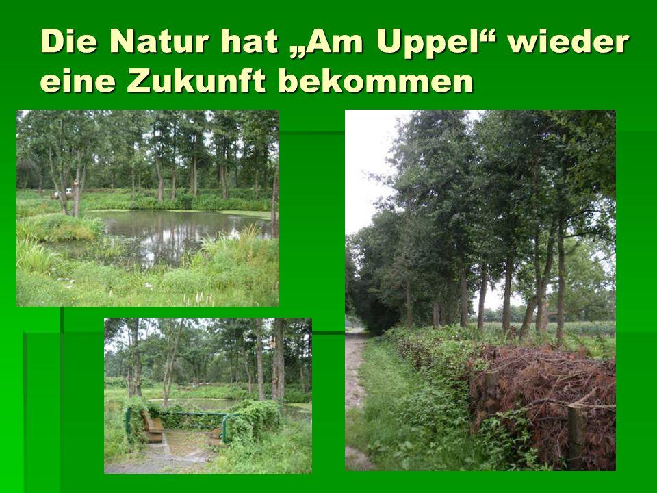 Die Natur hat Am Uppel wieder eine Zukunft bekommen