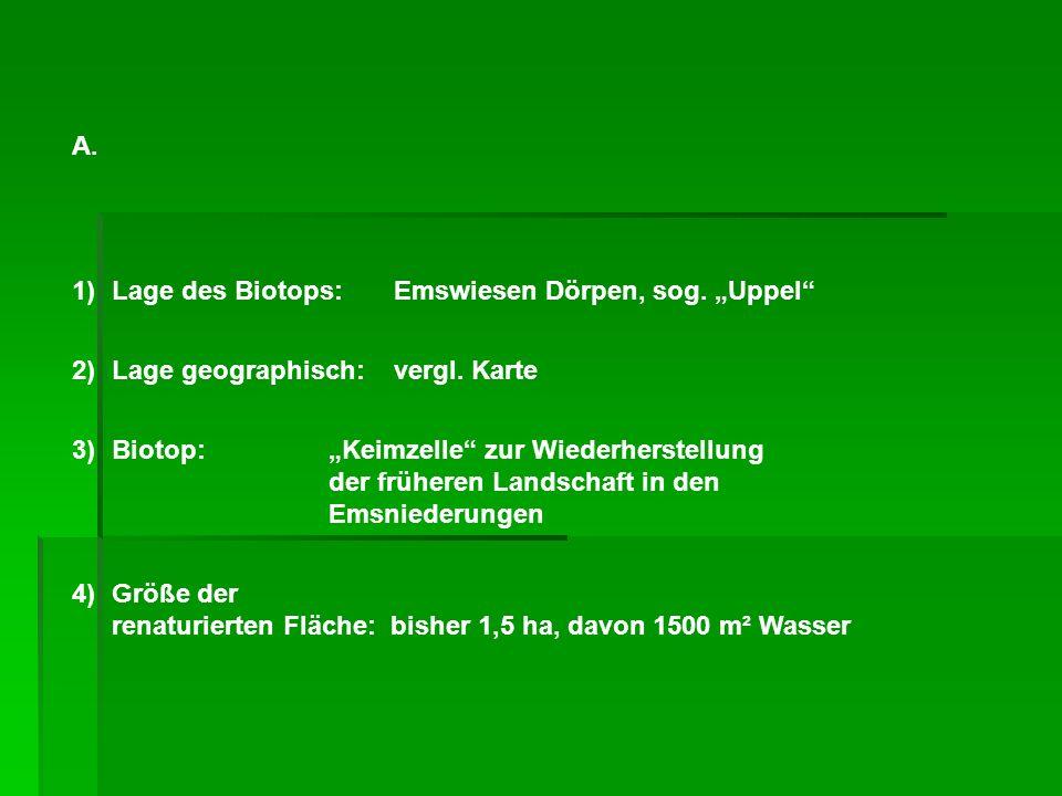 A. 1)Lage des Biotops: Emswiesen Dörpen, sog. Uppel 2)Lage geographisch: vergl.