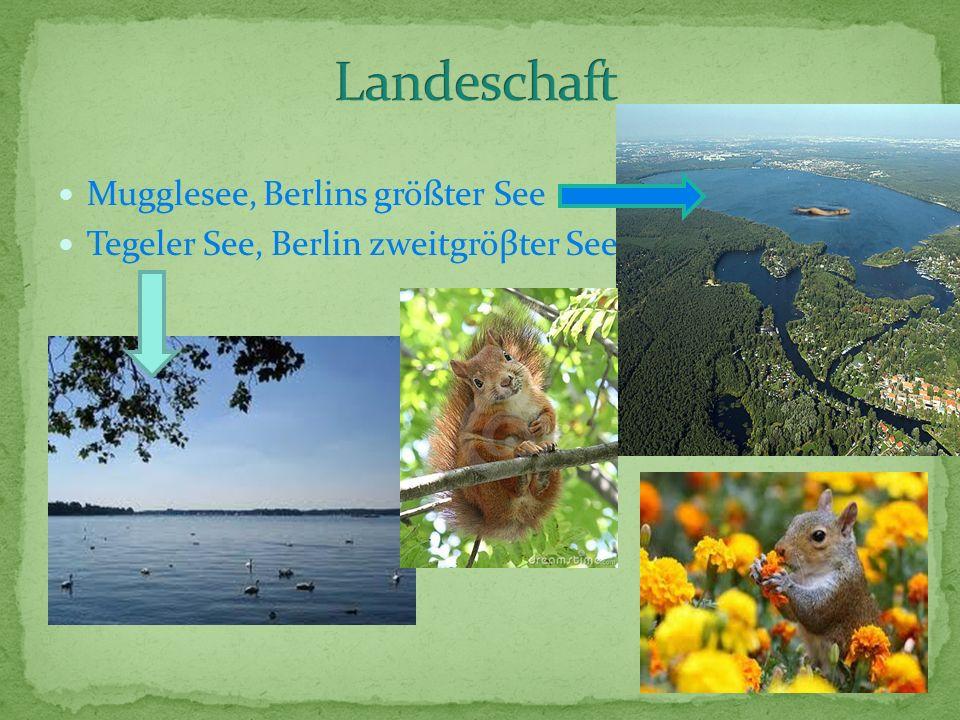 Mugglesee, Berlins größter See Tegeler See, Berlin zweitgröβter See