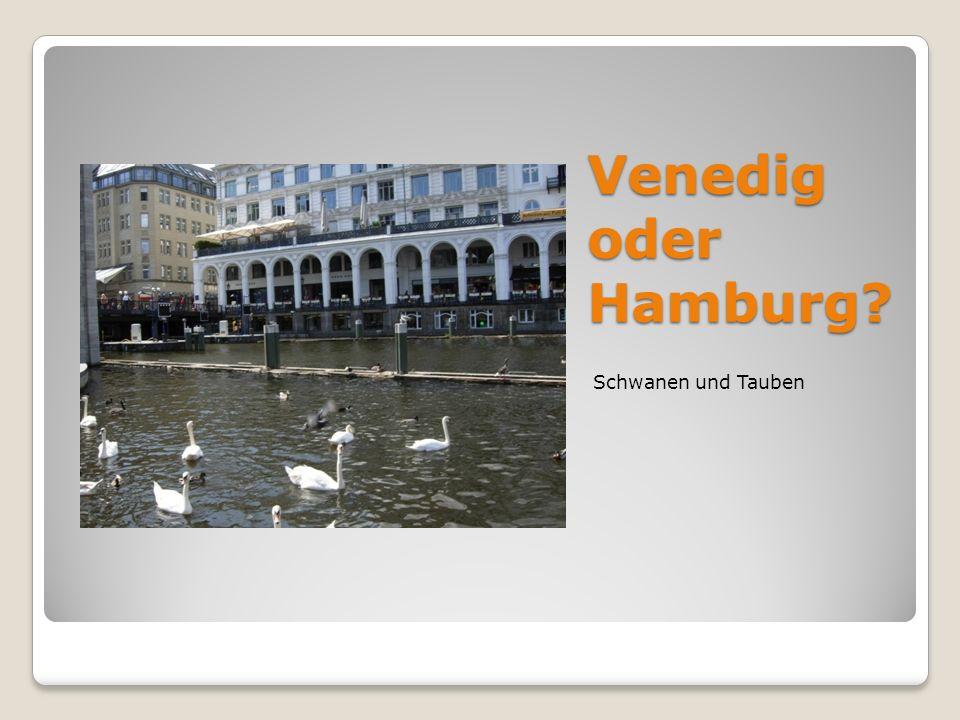 Venedig oder Hamburg? Schwanen und Tauben
