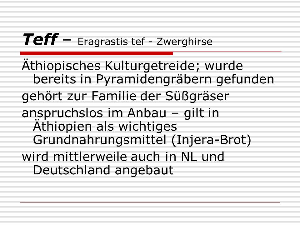 Teff – Eragrastis tef - Zwerghirse Äthiopisches Kulturgetreide; wurde bereits in Pyramidengräbern gefunden gehört zur Familie der Süßgräser anspruchslos im Anbau – gilt in Äthiopien als wichtiges Grundnahrungsmittel (Injera-Brot) wird mittlerweile auch in NL und Deutschland angebaut