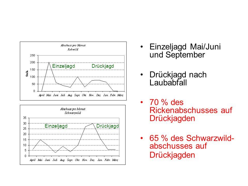 Einzeljagd Mai/Juni und September Drückjagd nach Laubabfall 70 % des Rickenabschusses auf Drückjagden 65 % des Schwarzwild- abschusses auf Drückjagden