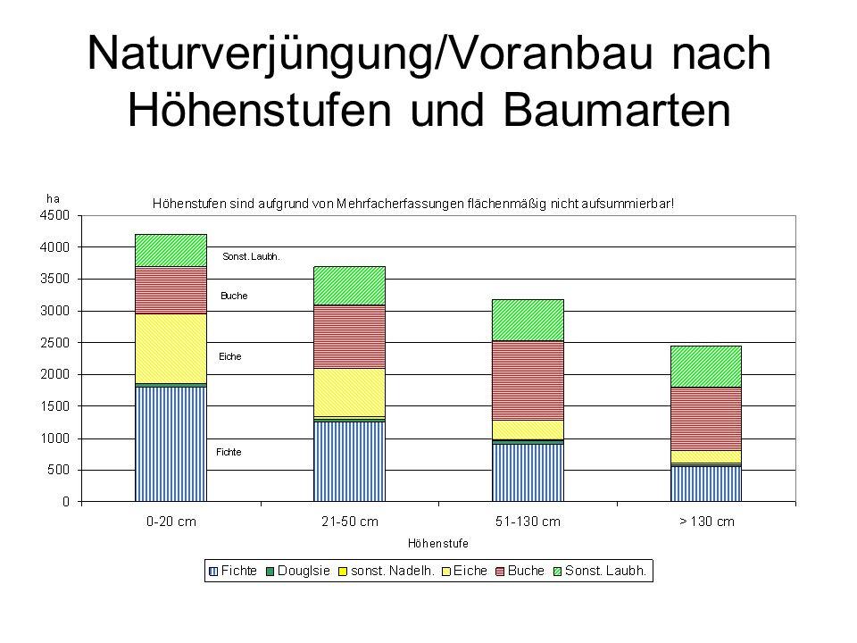 Naturverjüngung/Voranbau nach Höhenstufen und Baumarten