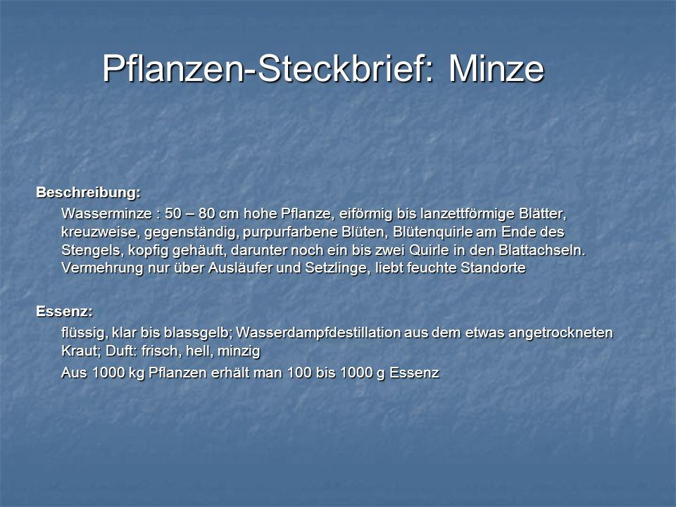 Pflanzen-Steckbrief: Minze Beschreibung: Wasserminze : 50 – 80 cm hohe Pflanze, eiförmig bis lanzettförmige Blätter, kreuzweise, gegenständig, purpurf