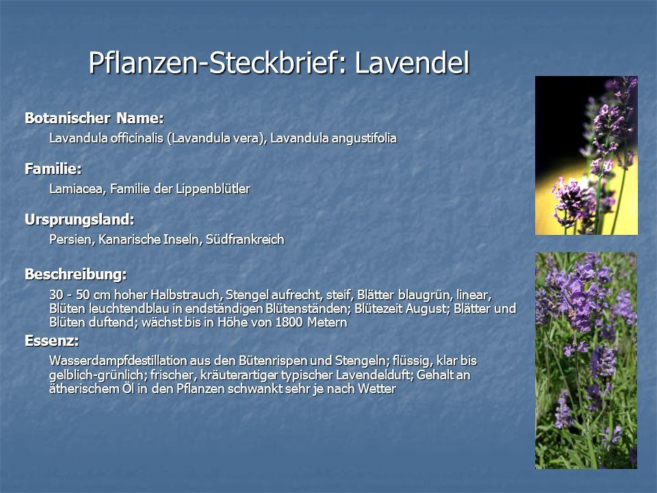 Pflanzen-Steckbrief: Lavendel Botanischer Name: Lavandula officinalis (Lavandula vera), Lavandula angustifolia Familie: Lamiacea, Familie der Lippenbl