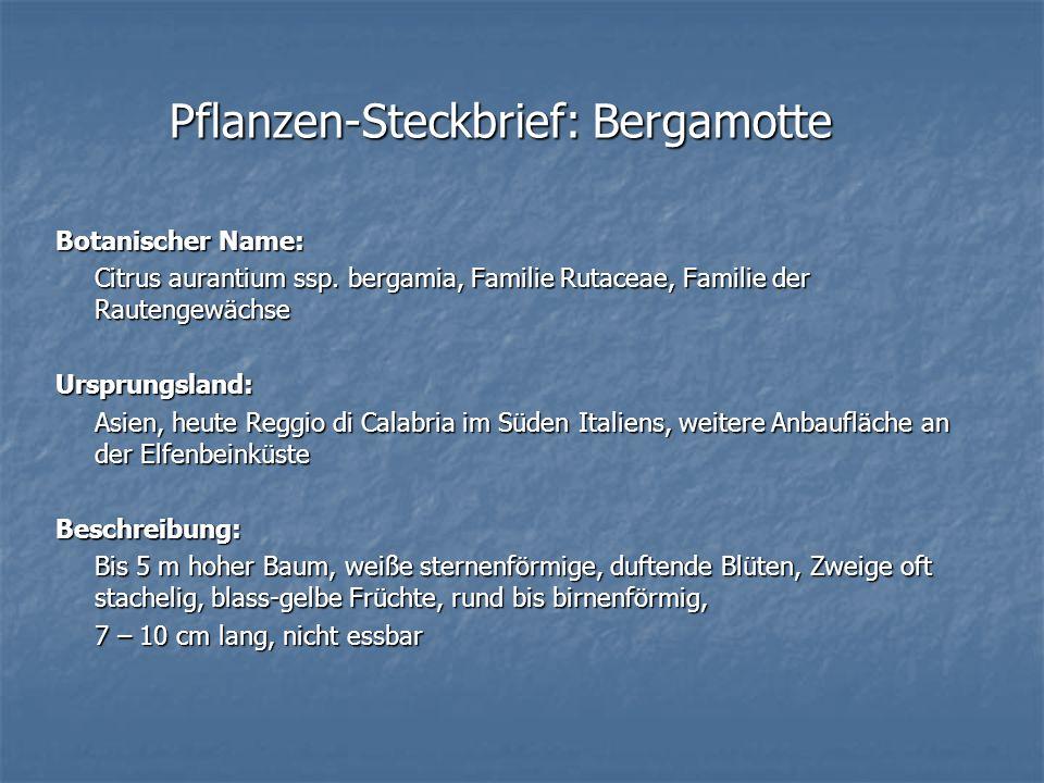 Pflanzen-Steckbrief: Bergamotte Botanischer Name: Citrus aurantium ssp. bergamia, Familie Rutaceae, Familie der Rautengewächse Ursprungsland: Asien, h