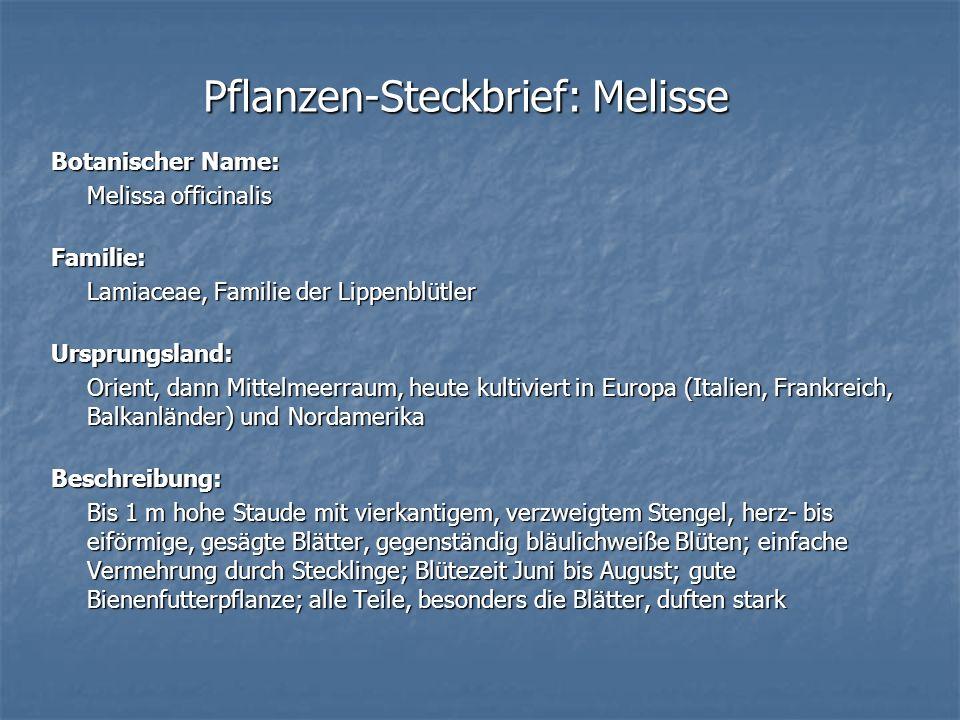 Pflanzen-Steckbrief: Melisse Botanischer Name: Melissa officinalis Familie: Lamiaceae, Familie der Lippenblütler Ursprungsland: Orient, dann Mittelmee