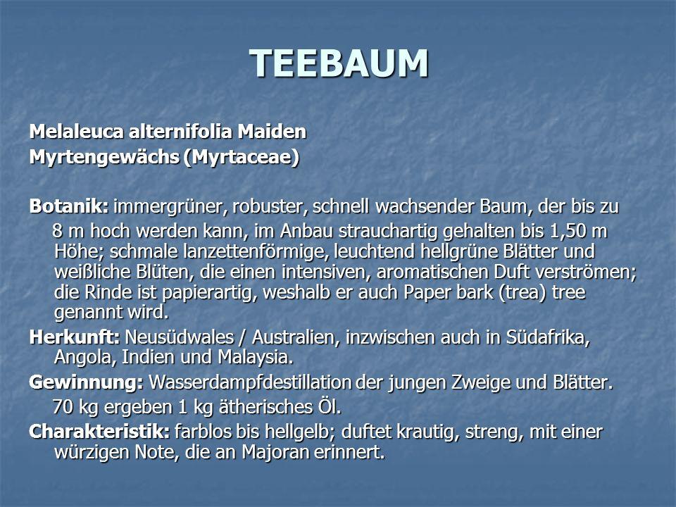 TEEBAUM Melaleuca alternifolia Maiden Myrtengewächs (Myrtaceae) Botanik: immergrüner, robuster, schnell wachsender Baum, der bis zu 8 m hoch werden ka