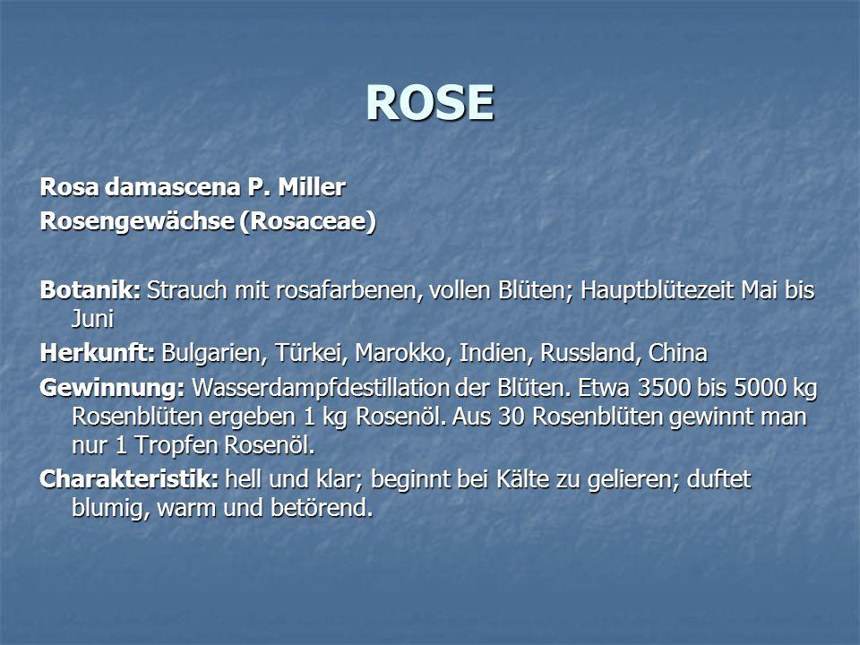 ROSE Rosa damascena P. Miller Rosengewächse (Rosaceae) Botanik: Strauch mit rosafarbenen, vollen Blüten; Hauptblütezeit Mai bis Juni Herkunft: Bulgari