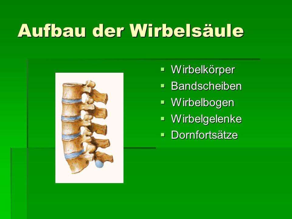 Aufbau der Wirbelsäule Wirbelkörper Wirbelkörper Bandscheiben Bandscheiben Wirbelbogen Wirbelbogen Wirbelgelenke Wirbelgelenke Dornfortsätze Dornforts
