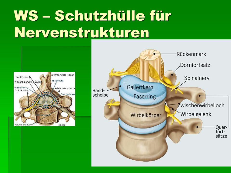 WS – Schutzhülle für Nervenstrukturen