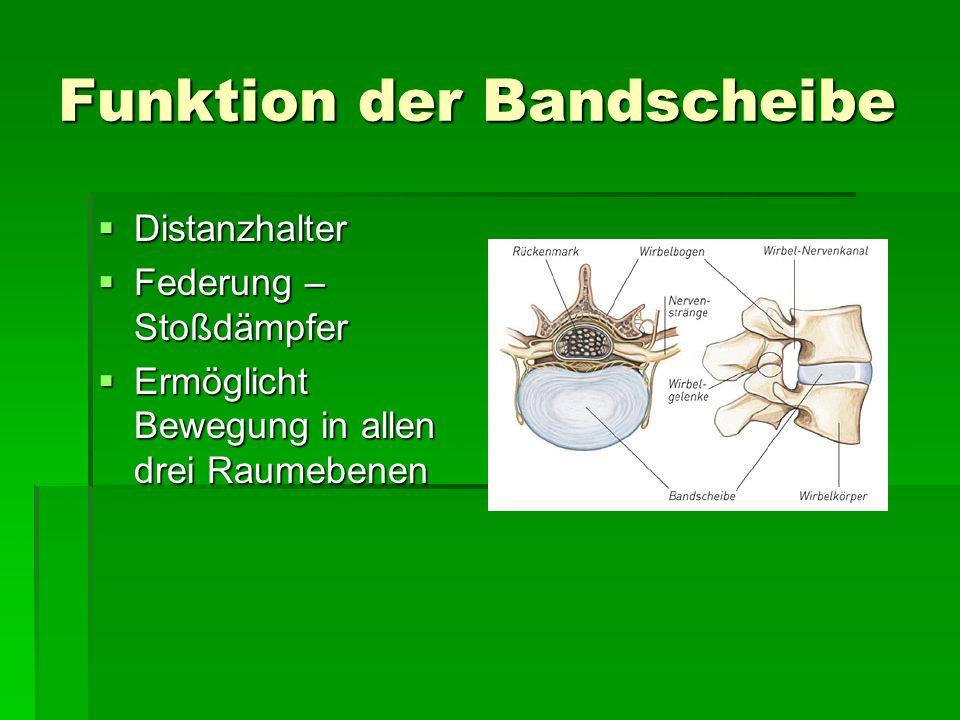 Funktion der Bandscheibe Distanzhalter Distanzhalter Federung – Stoßdämpfer Federung – Stoßdämpfer Ermöglicht Bewegung in allen drei Raumebenen Ermögl