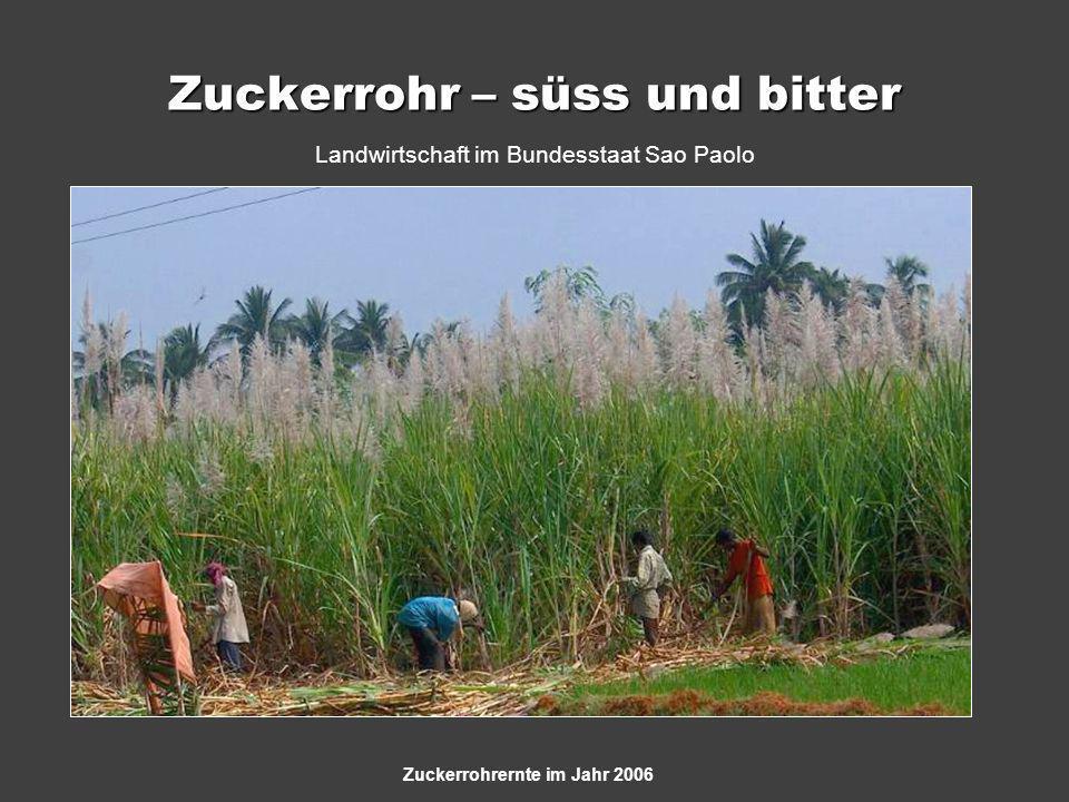Zuckerrohr – süss und bitter Landwirtschaft im Bundesstaat Sao Paolo Zuckerrohrernte im Jahr 2006