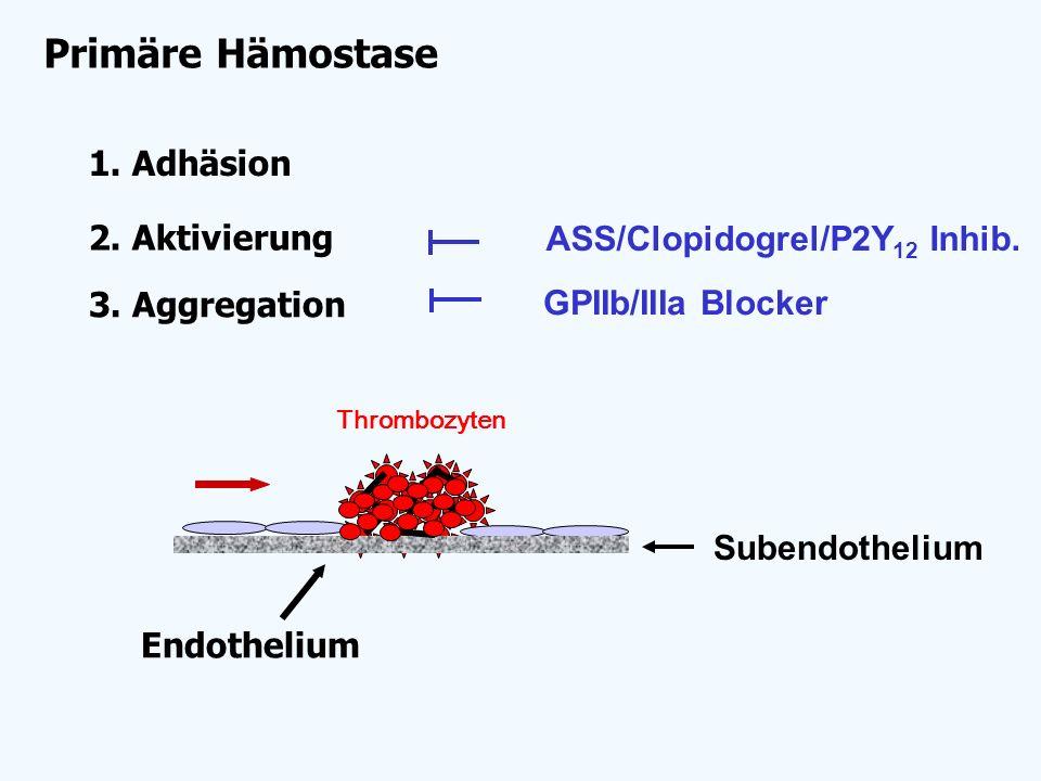 2. Aktivierung Endothelium Subendothelium 3. Aggregation Primäre Hämostase 1. Adhäsion Thrombozyten ASS/Clopidogrel/P2Y 12 Inhib. GPIIb/IIIa Blocker