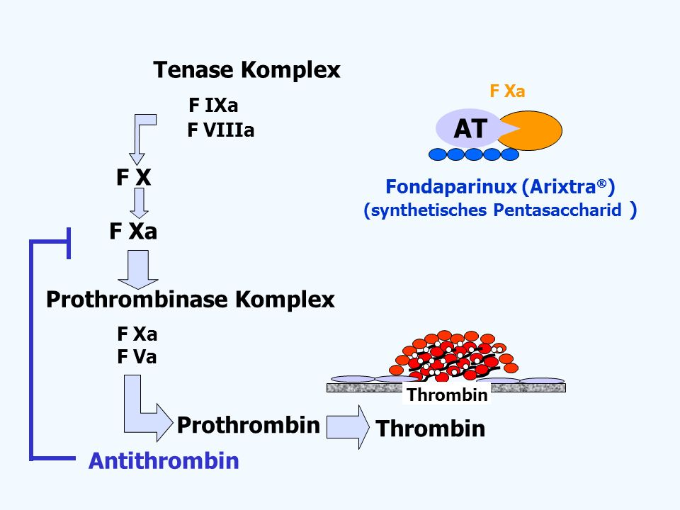 Fondaparinux (Arixtra ) (synthetisches Pentasaccharid ) F Xa AT F X F Xa Thrombin Prothrombin F Xa F Va Prothrombinase Komplex Tenase Komplex F VIIIa
