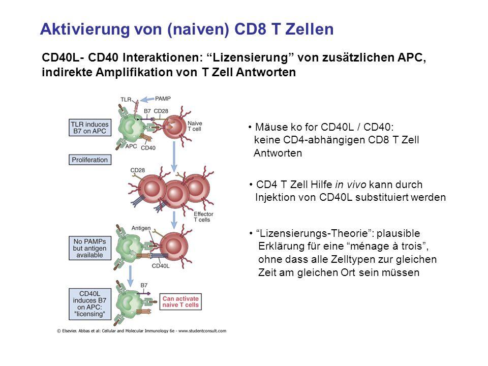 Aktivierung von (naiven) CD8 T Zellen CD40L- CD40 Interaktionen: Lizensierung von zusätzlichen APC, indirekte Amplifikation von T Zell Antworten Mäuse