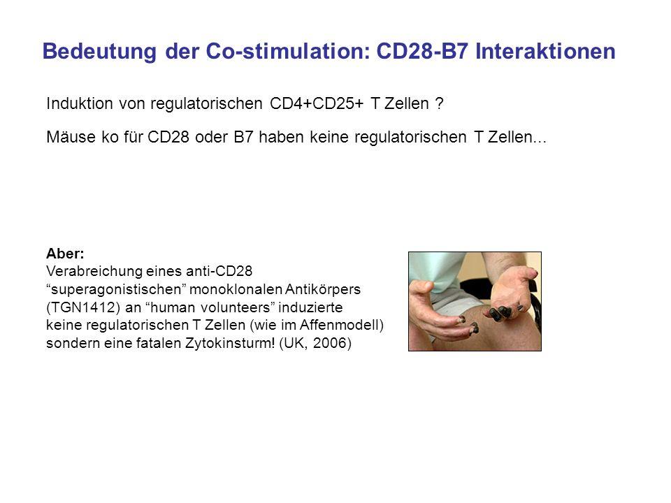Bedeutung der Co-stimulation: CD28-B7 Interaktionen Induktion von regulatorischen CD4+CD25+ T Zellen ? Mäuse ko für CD28 oder B7 haben keine regulator