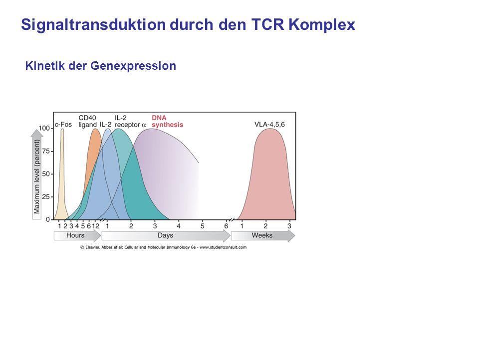 Signaltransduktion durch den TCR Komplex Kinetik der Genexpression