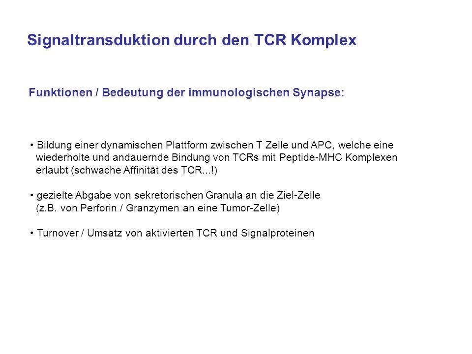 Funktionen / Bedeutung der immunologischen Synapse: Bildung einer dynamischen Plattform zwischen T Zelle und APC, welche eine wiederholte und andauern