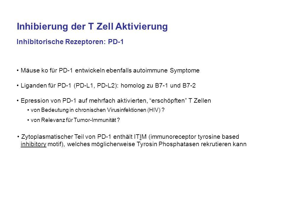 Inhibierung der T Zell Aktivierung Inhibitorische Rezeptoren: PD-1 Mäuse ko für PD-1 entwickeln ebenfalls autoimmune Symptome Liganden für PD-1 (PD-L1