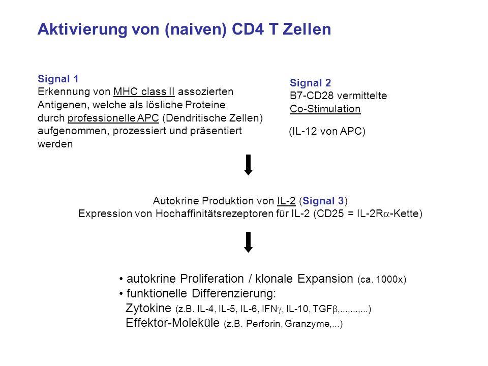 Aktivierung von (naiven) CD4 T Zellen Signal 1 Erkennung von MHC class II assozierten Antigenen, welche als lösliche Proteine durch professionelle APC