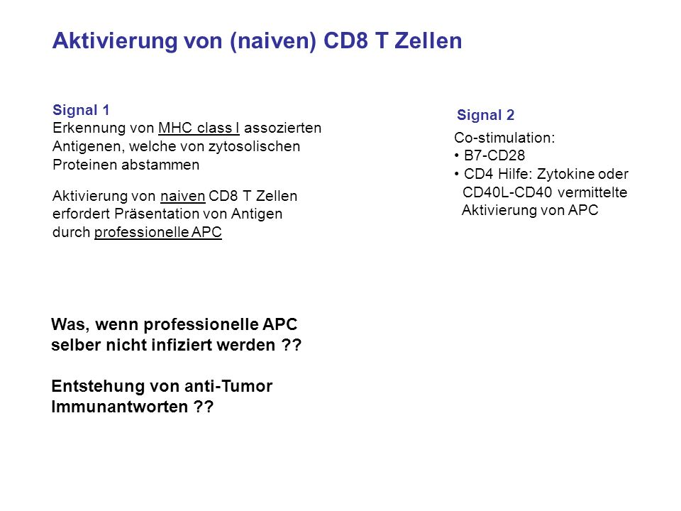 Aktivierung von (naiven) CD8 T Zellen Signal 1 Erkennung von MHC class I assozierten Antigenen, welche von zytosolischen Proteinen abstammen Signal 2
