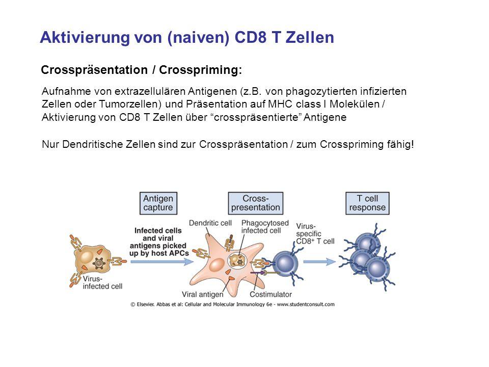 Aktivierung von (naiven) CD8 T Zellen Crosspräsentation / Crosspriming: Aufnahme von extrazellulären Antigenen (z.B. von phagozytierten infizierten Ze