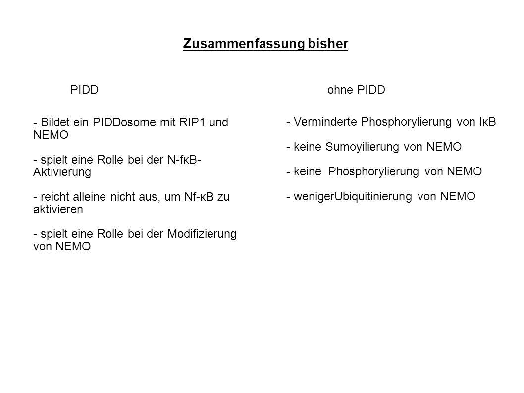 Zusammenfassung bisher PIDDohne PIDD - Bildet ein PIDDosome mit RIP1 und NEMO - spielt eine Rolle bei der N-fκB- Aktivierung - reicht alleine nicht aus, um Nf-κB zu aktivieren - spielt eine Rolle bei der Modifizierung von NEMO - Verminderte Phosphorylierung von IκB - keine Sumoyilierung von NEMO - keine Phosphorylierung von NEMO - wenigerUbiquitinierung von NEMO