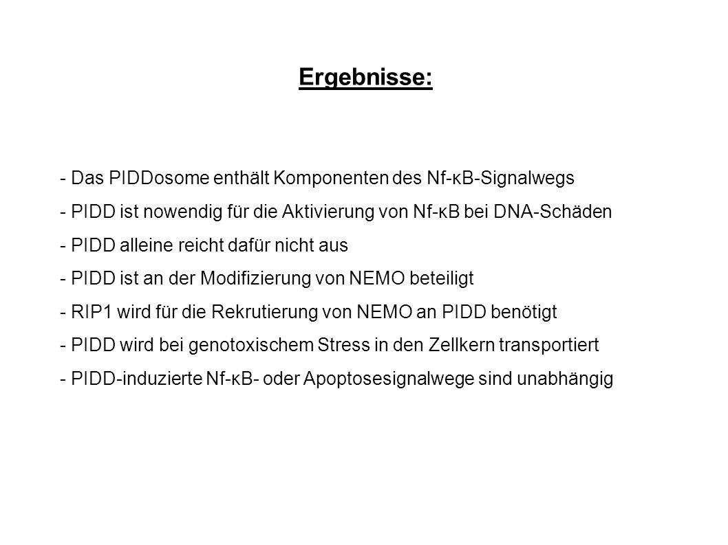 Ergebnisse: - Das PIDDosome enthält Komponenten des Nf-κB-Signalwegs - PIDD ist nowendig für die Aktivierung von Nf-κB bei DNA-Schäden - PIDD alleine reicht dafür nicht aus - PIDD ist an der Modifizierung von NEMO beteiligt - RIP1 wird für die Rekrutierung von NEMO an PIDD benötigt - PIDD wird bei genotoxischem Stress in den Zellkern transportiert - PIDD-induzierte Nf-κB- oder Apoptosesignalwege sind unabhängig