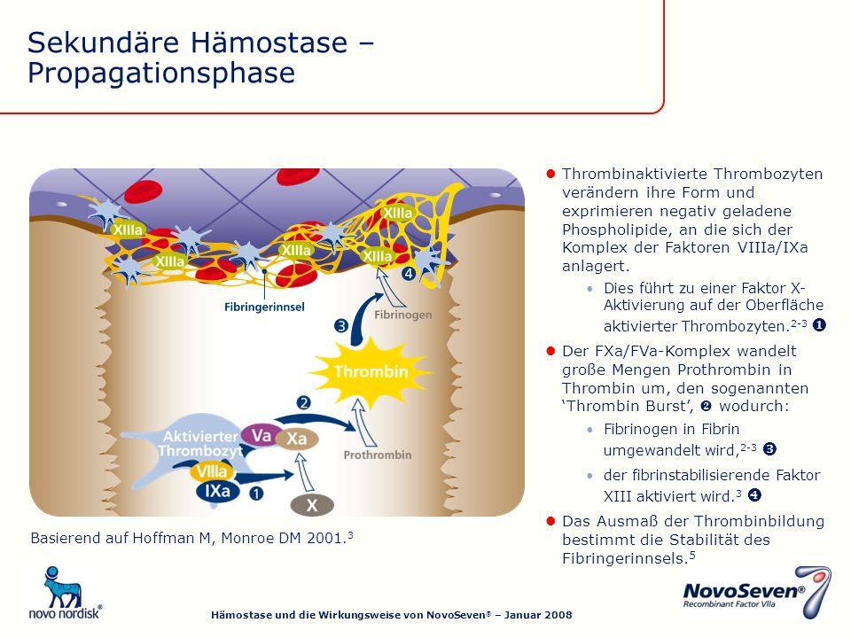 Das Ausmaß der Thrombinbildung bestimmt die Stabilität des Fibringerinnsels.