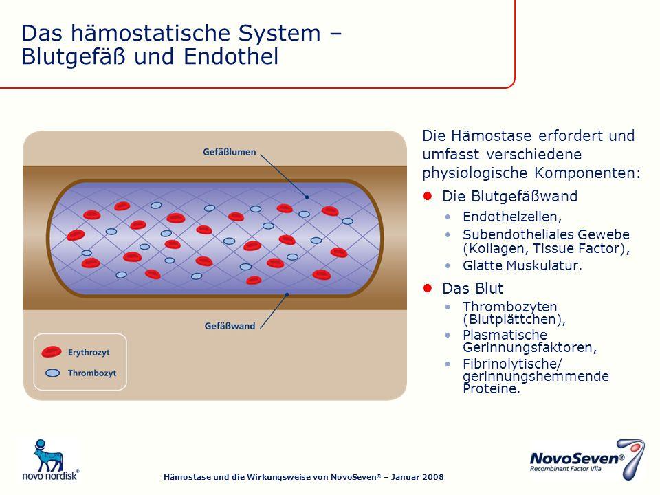 Das hämostatische System – Blutgefäß und Endothel Die Hämostase erfordert und umfasst verschiedene physiologische Komponenten: Die Blutgefäßwand Endothelzellen, Subendotheliales Gewebe (Kollagen, Tissue Factor), Glatte Muskulatur.