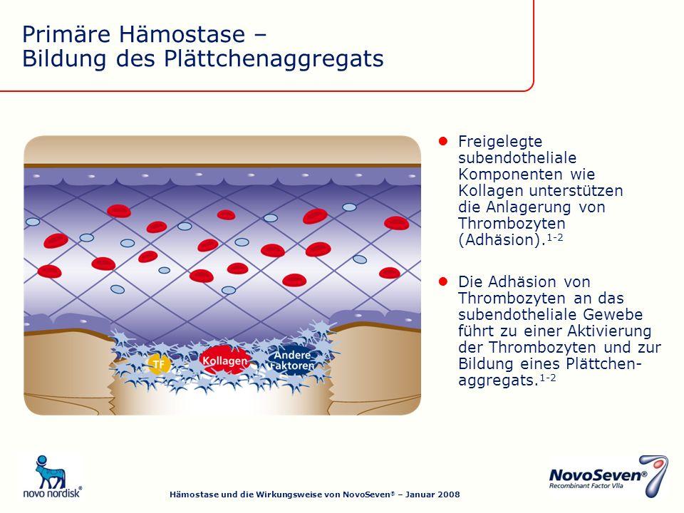 Primäre Hämostase – Bildung des Plättchenaggregats Freigelegte subendotheliale Komponenten wie Kollagen unterstützen die Anlagerung von Thrombozyten (Adhäsion).