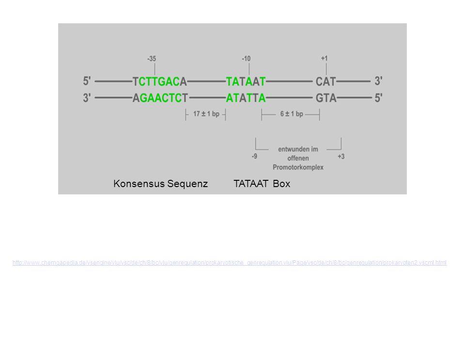 Konsensus SequenzTATAAT Box http://www.chemgapedia.de/vsengine/vlu/vsc/de/ch/8/bc/vlu/genregulation/prokaryotische_genregulation.vlu/Page/vsc/de/ch/8/