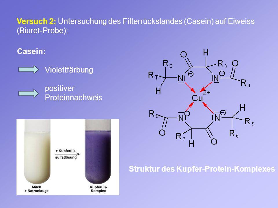 Versuch 2: Untersuchung des Filterrückstandes (Casein) auf Eiweiss (Biuret-Probe): Struktur des Kupfer-Protein-Komplexes Casein: Violettfärbung positi