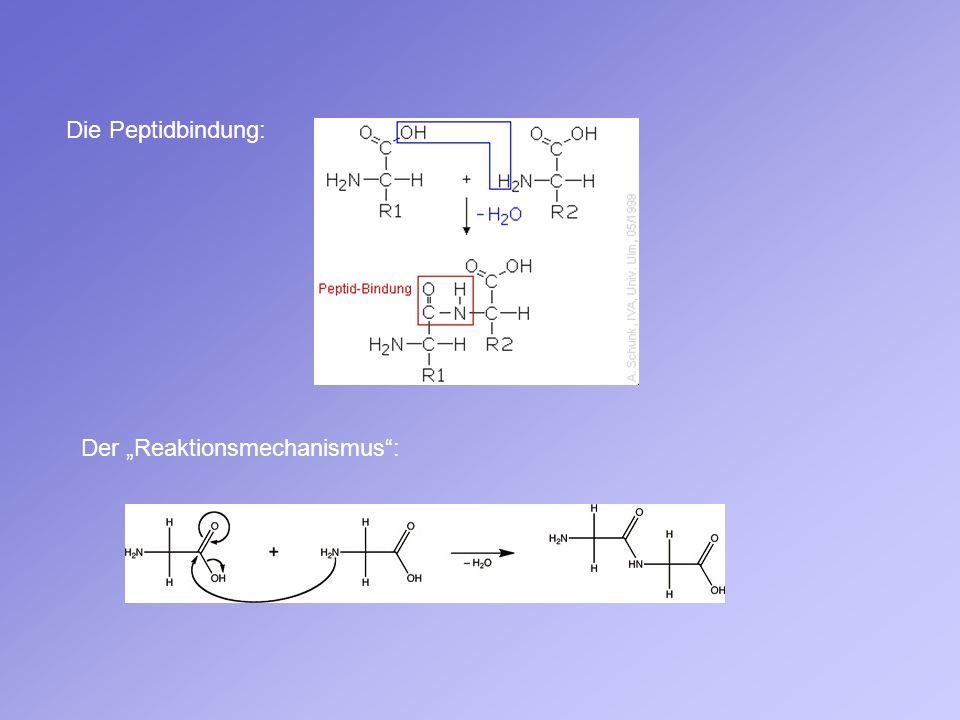 Die Peptidbindung: Der Reaktionsmechanismus: