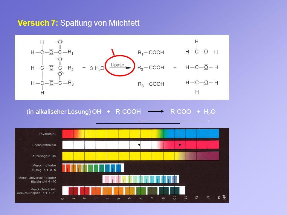 Versuch 7: Spaltung von Milchfett Enzym (in alkalischer Lösung) OH - + R-COOH R-COO - + H 2 O