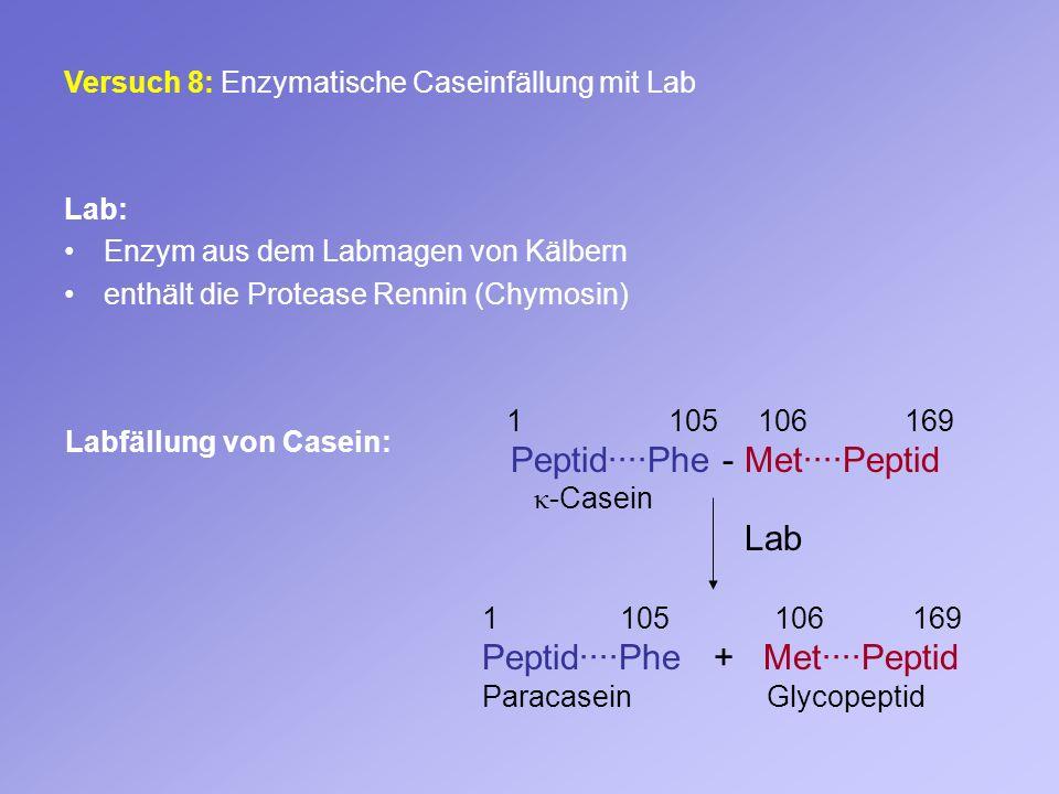 Versuch 8: Enzymatische Caseinfällung mit Lab Lab: Enzym aus dem Labmagen von Kälbern enthält die Protease Rennin (Chymosin) 1 105 106 169 Peptid····P