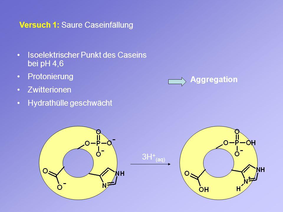 Versuch 1: Saure Caseinfällung Isoelektrischer Punkt des Caseins bei pH 4,6 Protonierung Zwitterionen Hydrathülle geschwächt Aggregation 3H + (aq)